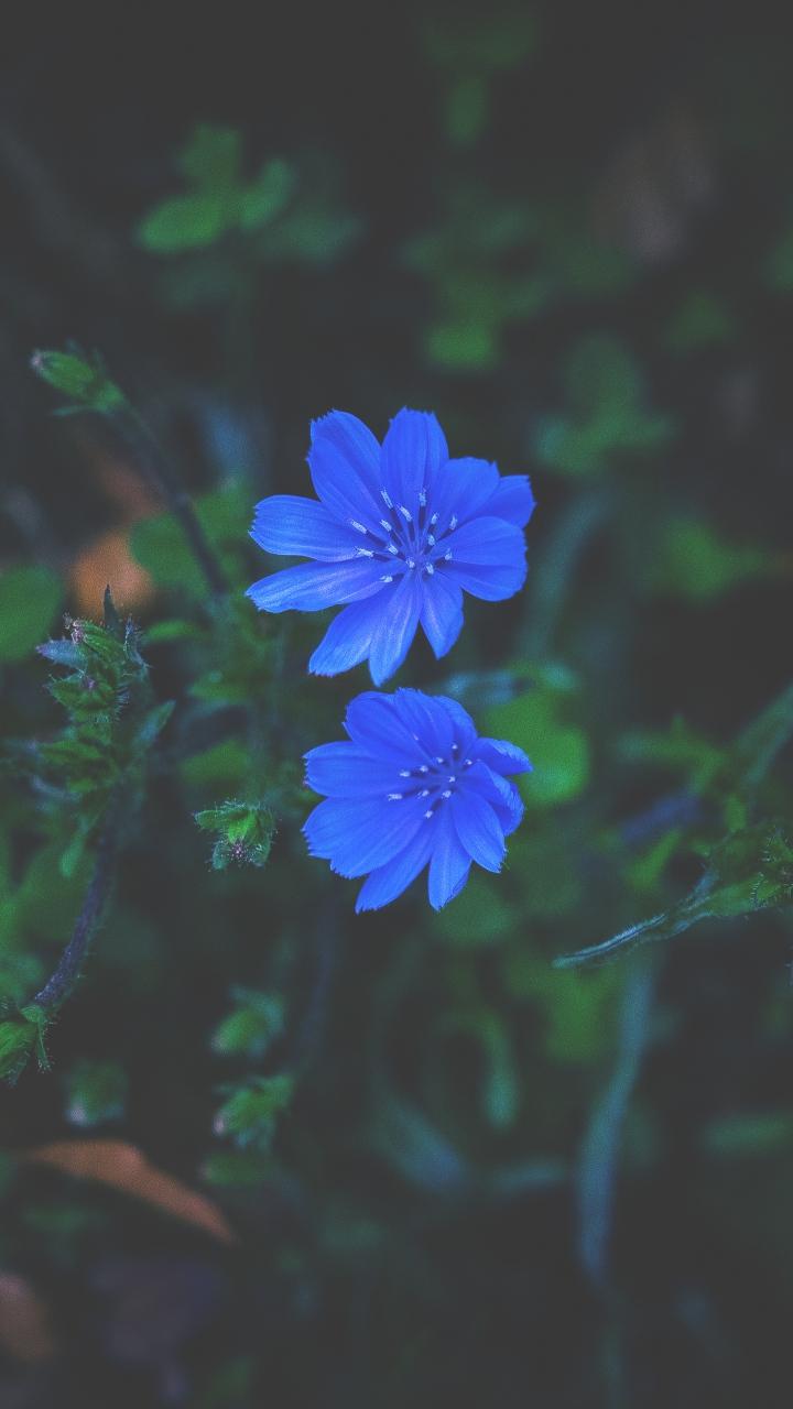 Flowers Grass Blue Wallpaper 720x1280