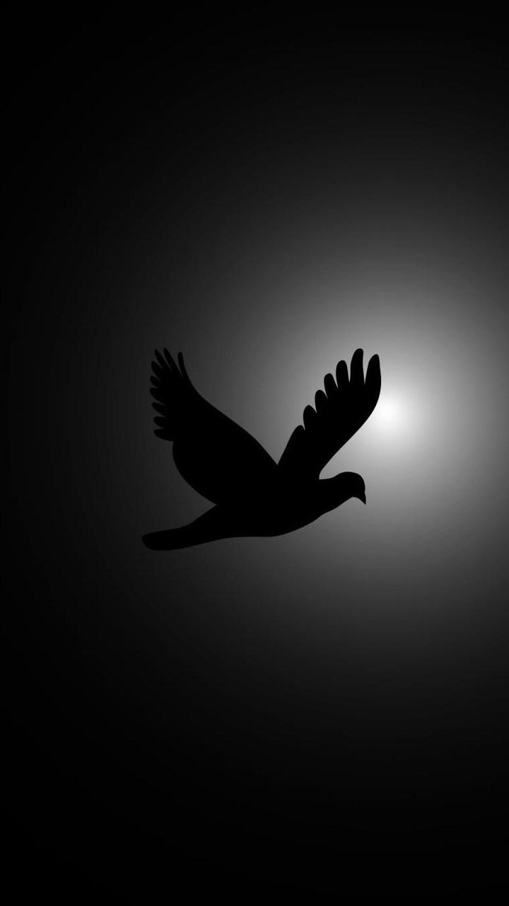 Flying Bird Photography Wallpaper 720x1280