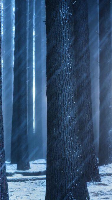 Forest Sunbeam Image Wallpaper 1080x1920 380x676