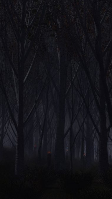 forest trees background dark 380x676