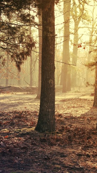 Forest Trees Grass Morning Light 380x676