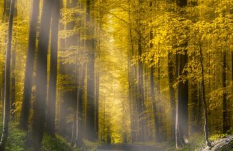 Forests Roads Rays Of Light It Wallpaper 2160x3840 340x220