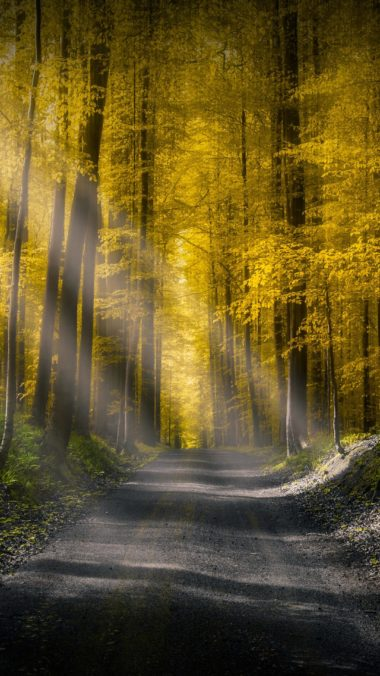 Forests Roads Rays Of Light It Wallpaper 2160x3840 380x676