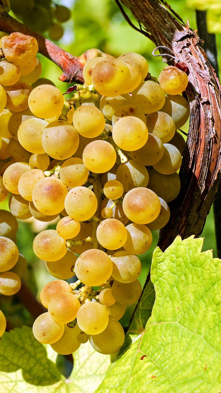 Grapes Berries Vine Branch Wallpaper 720x1280