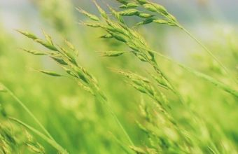 Grass Field Wallpaper 2160x3840 340x220