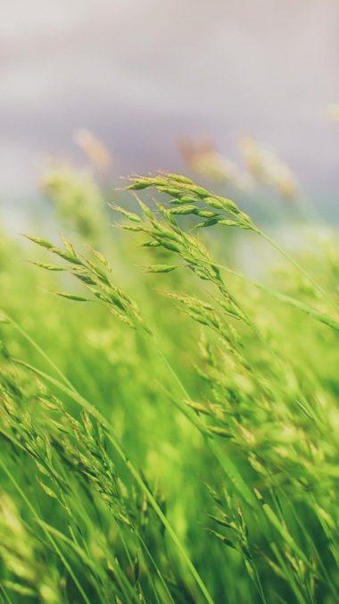 Grass Field Wallpaper 2160x3840 380x676