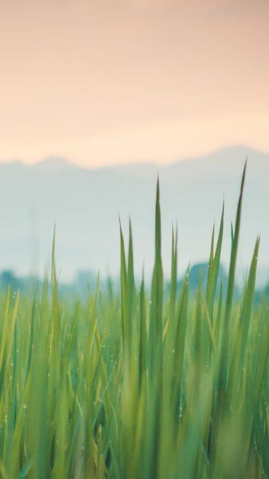 Grass New Wallpaper 1080x1920 380x676