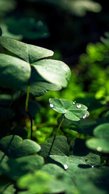 Green Leaf Macro Nature Grass Water Drop 7a Wallpaper 2160x3840 380x676