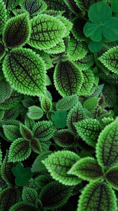 Green Leaves Qhd Wallpaper 1080x1920 380x676