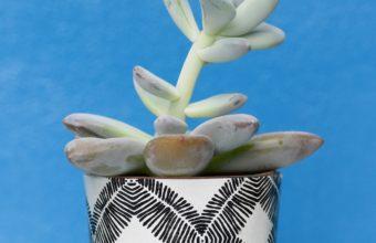 Houseplant Pot Table Wallpaper 2160x3840 340x220