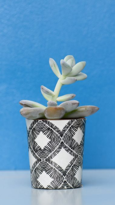 Houseplant Pot Table Wallpaper 720x1280 380x676