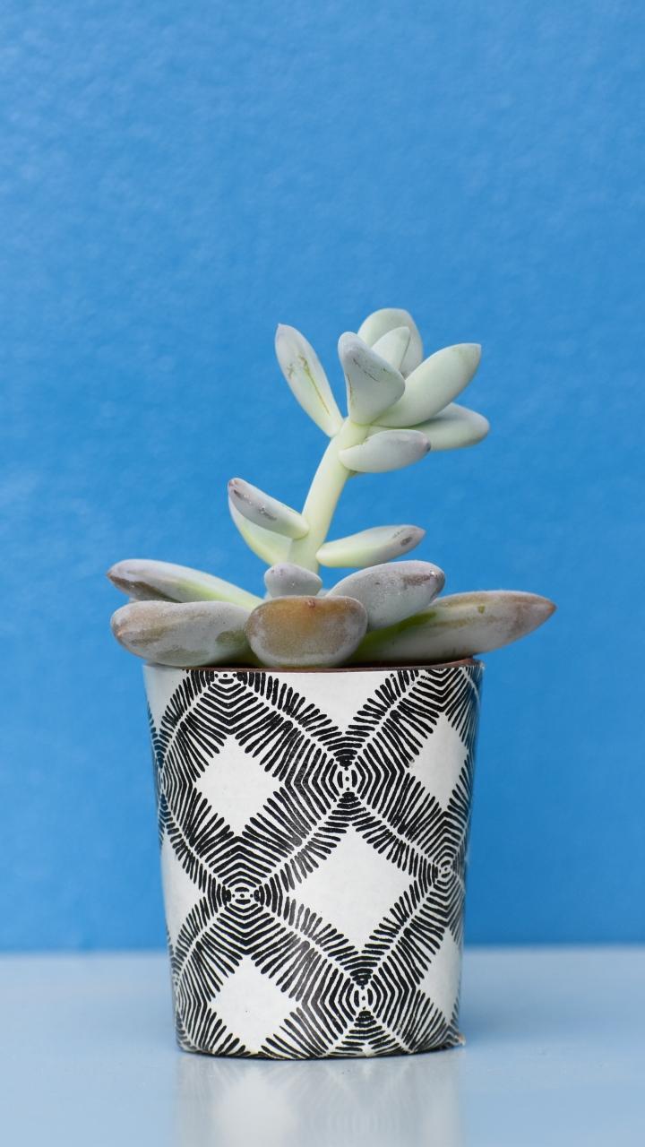 Houseplant Pot Table Wallpaper 720x1280