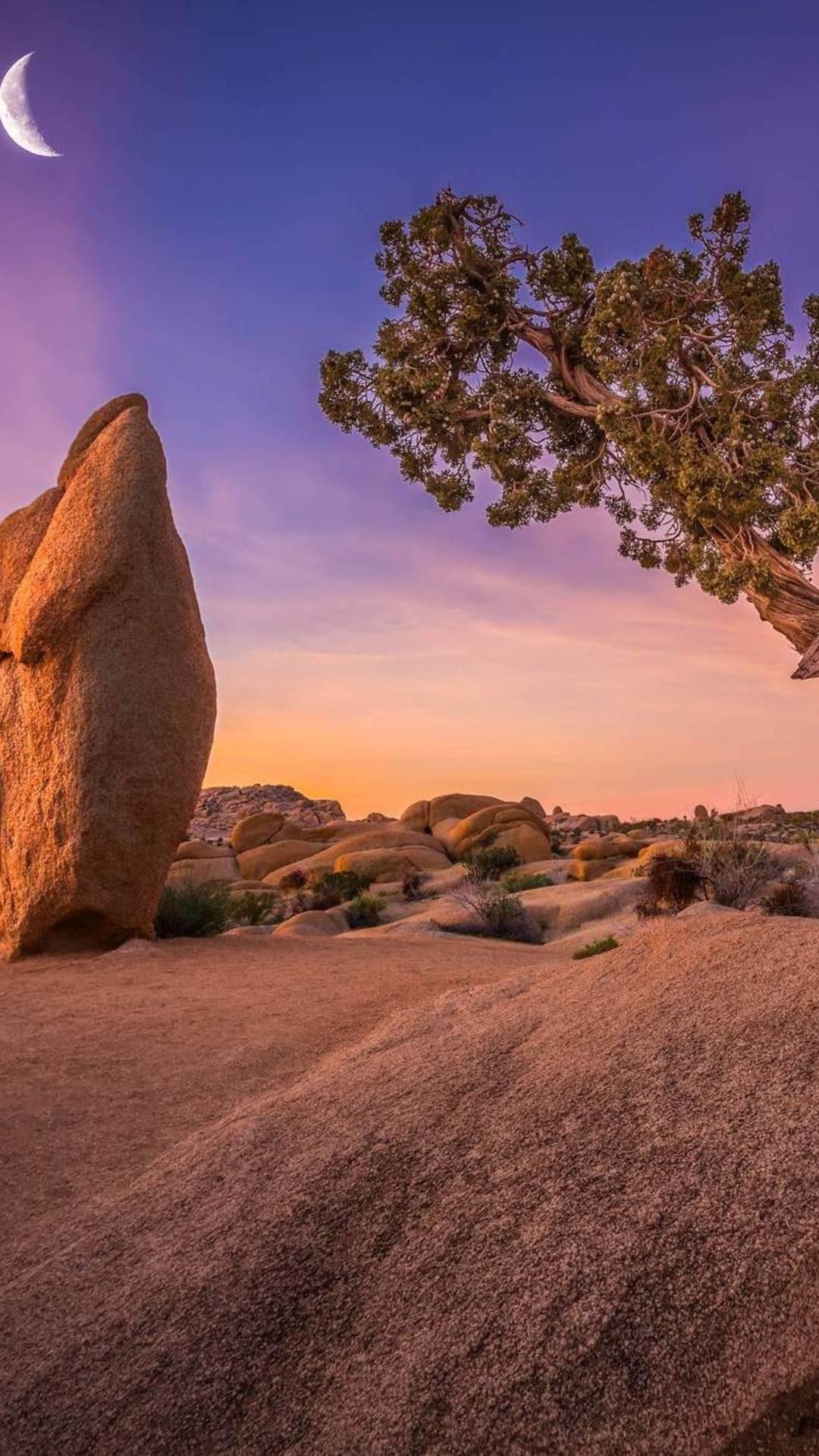 Joshua Tree National Park Om Wallpaper 1080x1920