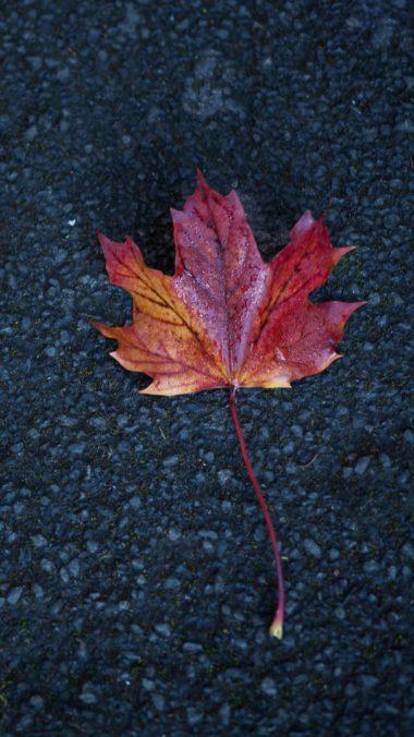 Leaf Autumn Tb Wallpaper 2160x3840 380x676