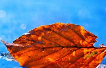 Leaf Fall Pic Wallpaper 1080x1920 340x220