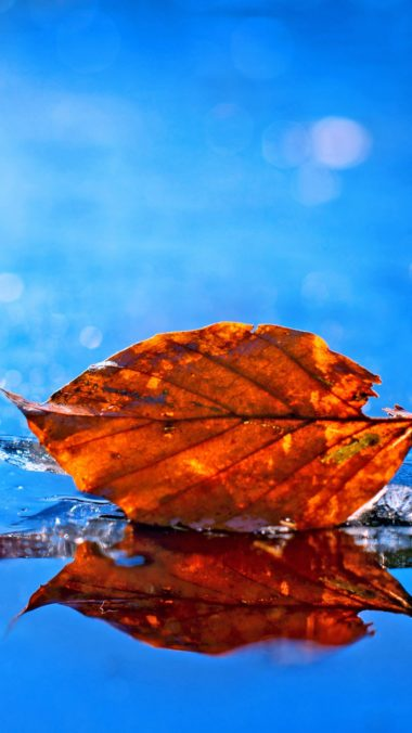 Leaf Fall Pic Wallpaper 1080x1920 380x676