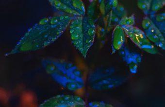 Leaves Drops Dark Wallpaper 720x1280 340x220