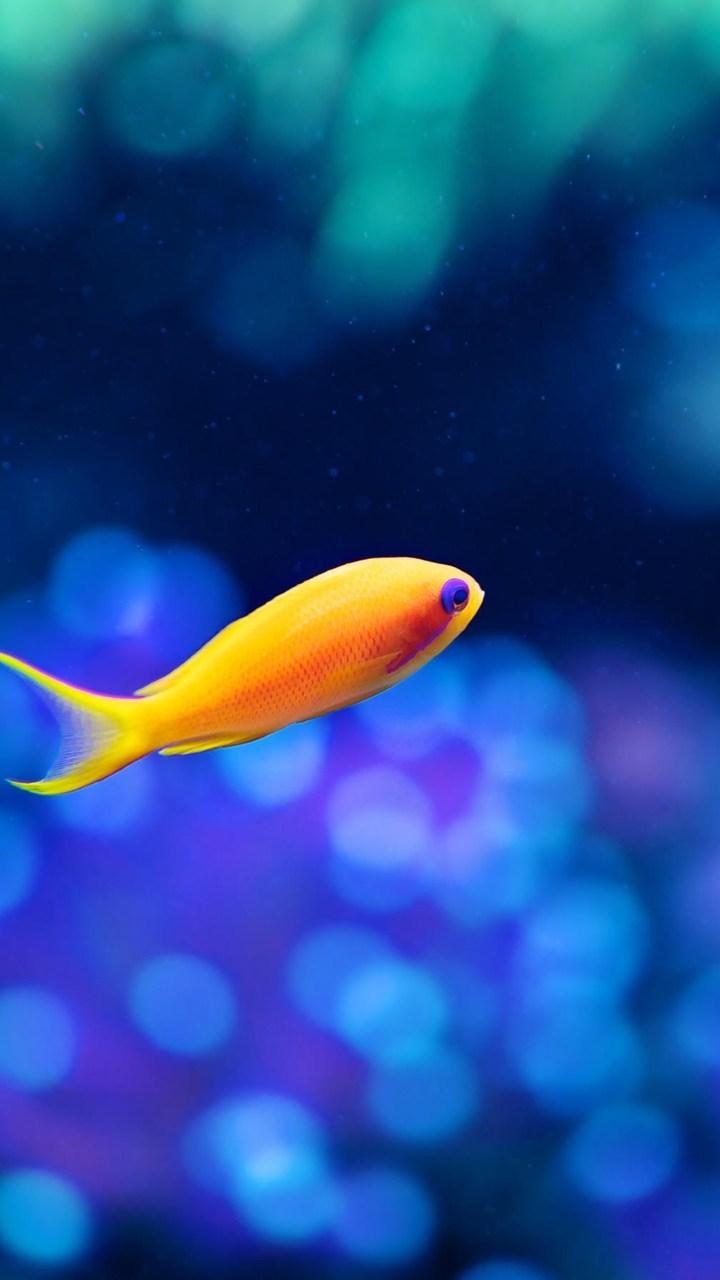 Little Fancy Fish Wallpaper 720x1280