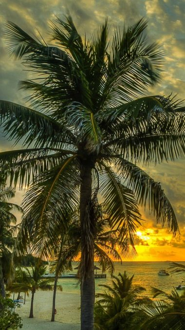 Maldives Palms Trees Shadow Sea Ocean Beach Hdr 380x676