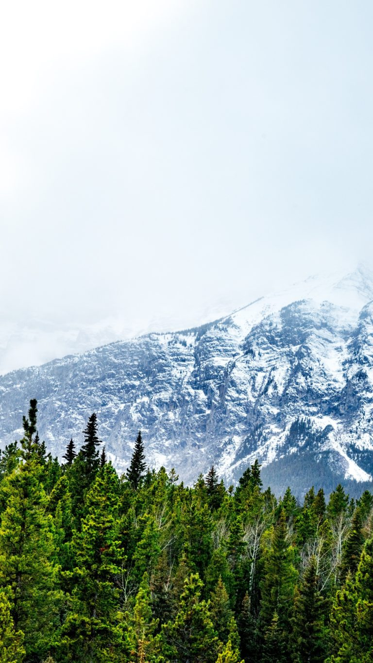 Mountains Snow Peaks Trees Wallpaper 2160x3840 768x1365