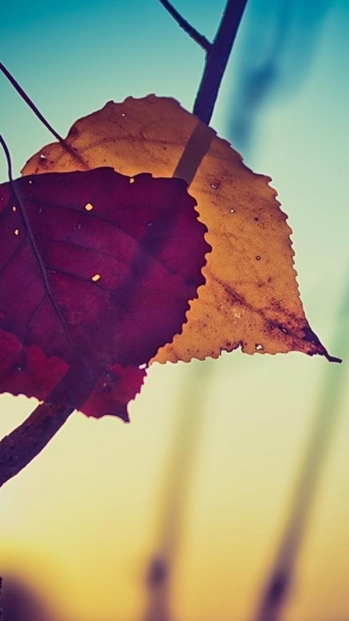 Nature Leaves Desktop Wallpaper 720x1280