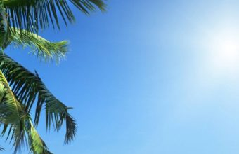 Palm Tree Ultra HD Wallpaper 1080x2160 340x220