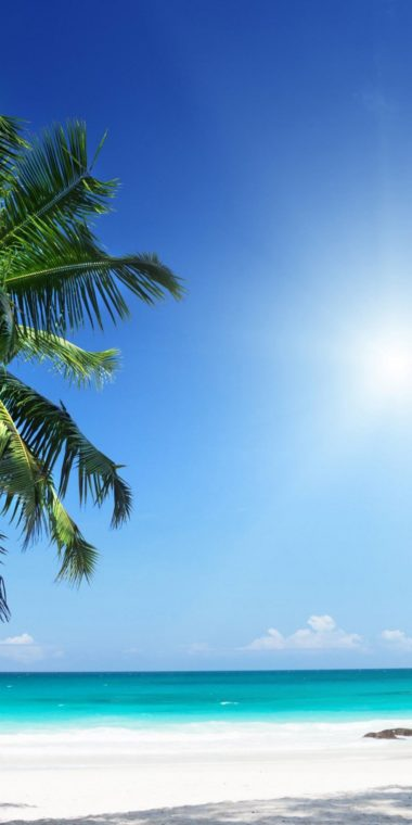 Palm Tree Ultra HD Wallpaper 1080x2160 380x760