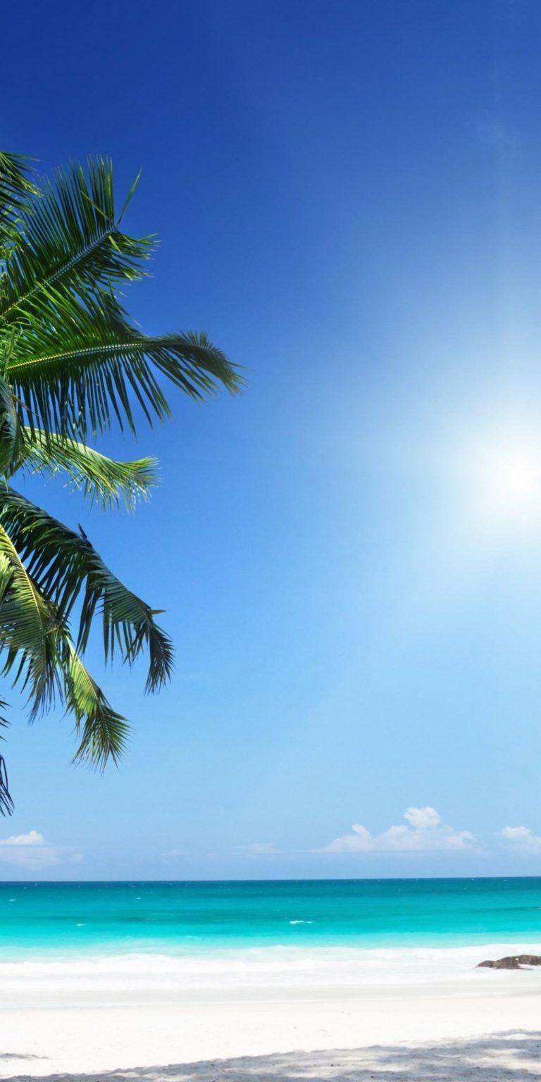 Palm Tree Ultra HD Wallpaper 1080x2160 768x1536