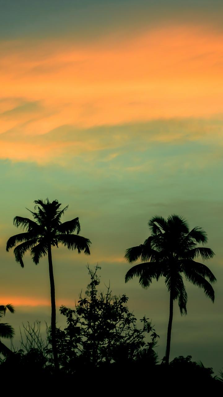 Palms Sunset Sky Wallpaper 720x1280