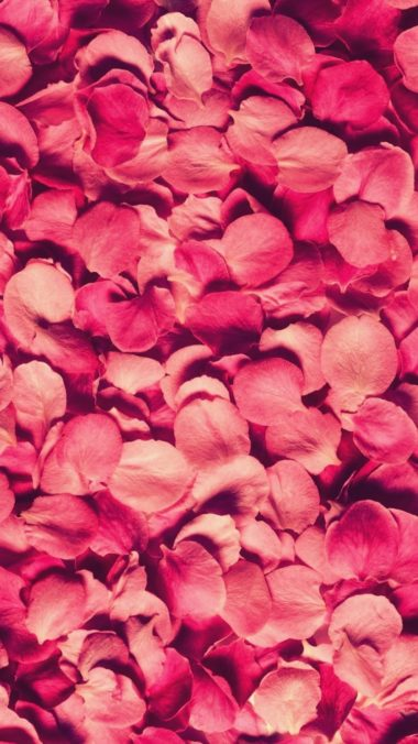 Petals Rose Red Texture 380x676