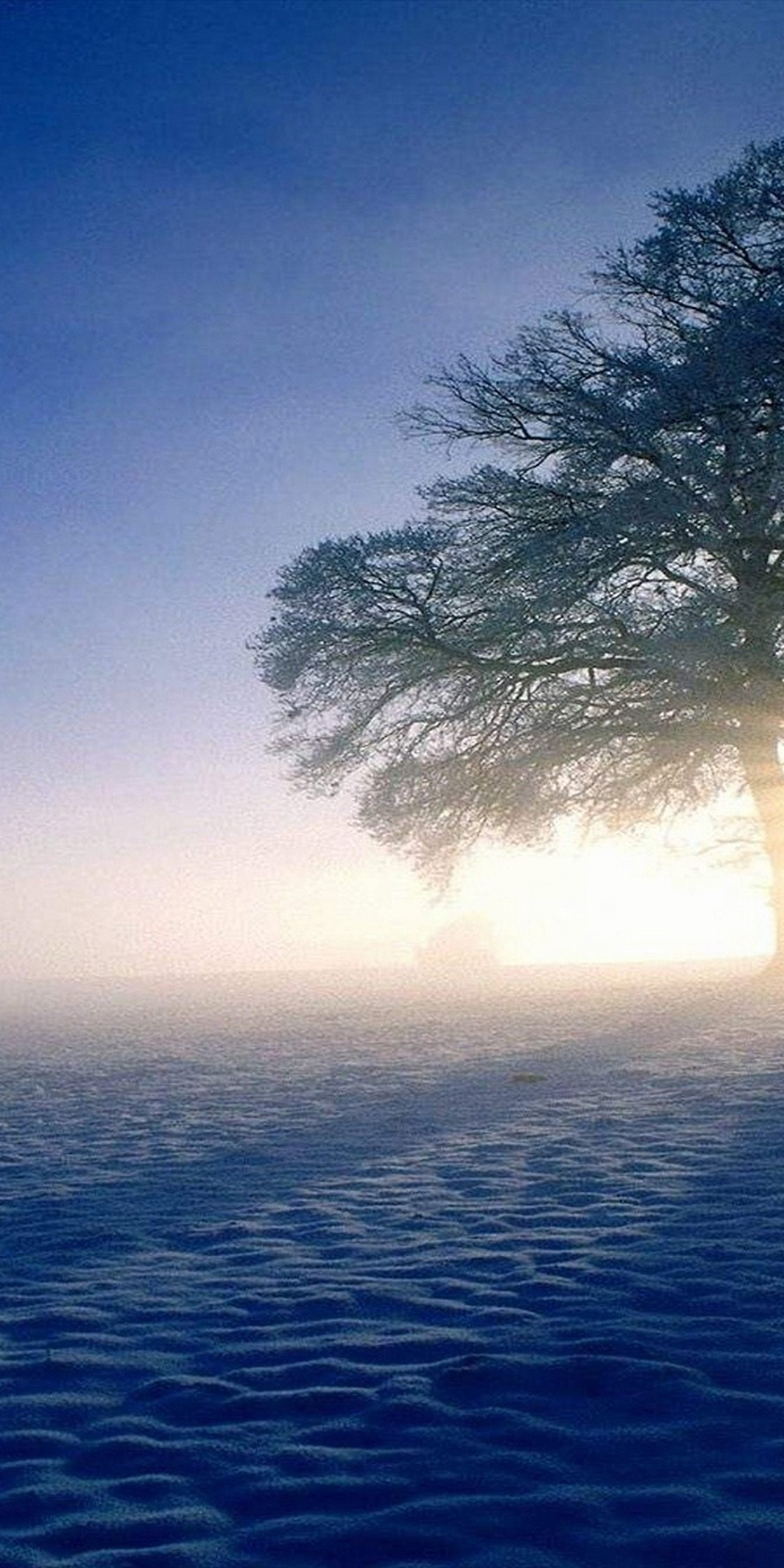 1080×2160 wallpaper: Plandscapes Nature Winter Snow Sun Ultra HD Wallpaper