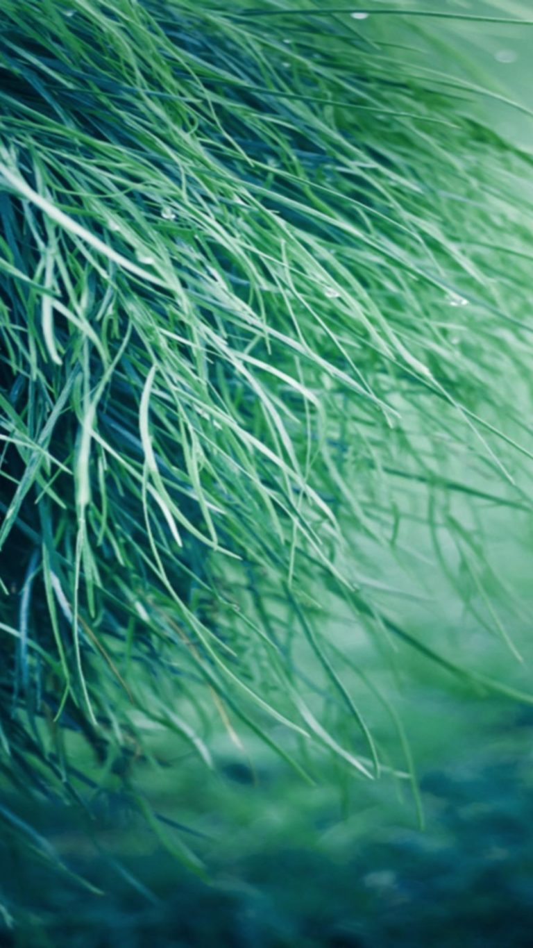 Pure Grass Wallpaper 2160x3840 768x1365