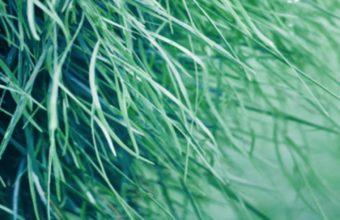 Pure Grass Wallpaper 720x1280 340x220