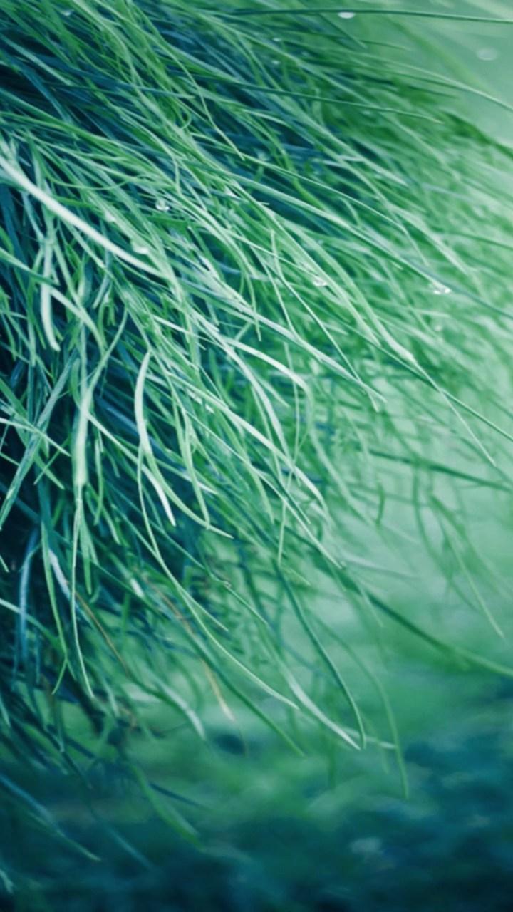 Pure Grass Wallpaper 720x1280