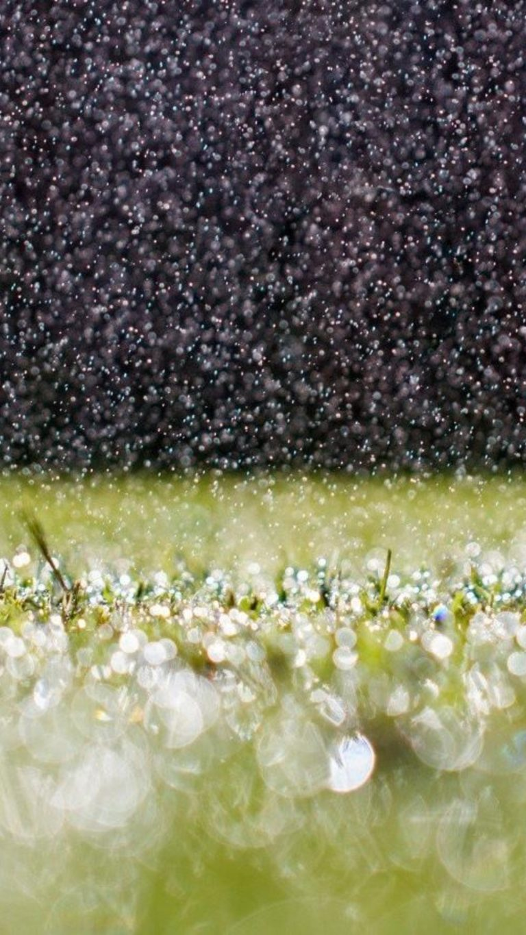 Raindrops On Grass Wallpaper 2160x3840 768x1365