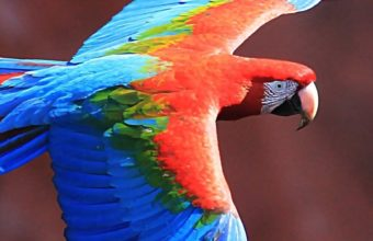 Red And Green Macaw Ultra HD Wallpaper 1080x2160 340x220