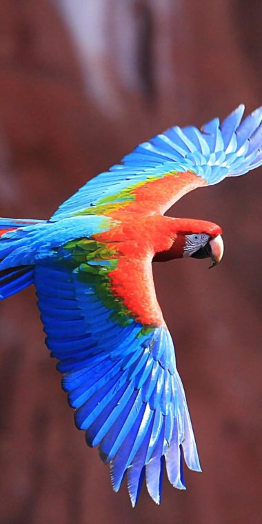 Red And Green Macaw Ultra HD Wallpaper 1080x2160 380x760