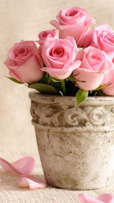 Roses Flowers Pot Petals 380x676