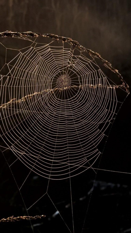 Spider Web Macro 12 Wallpaper 2160x3840 768x1365