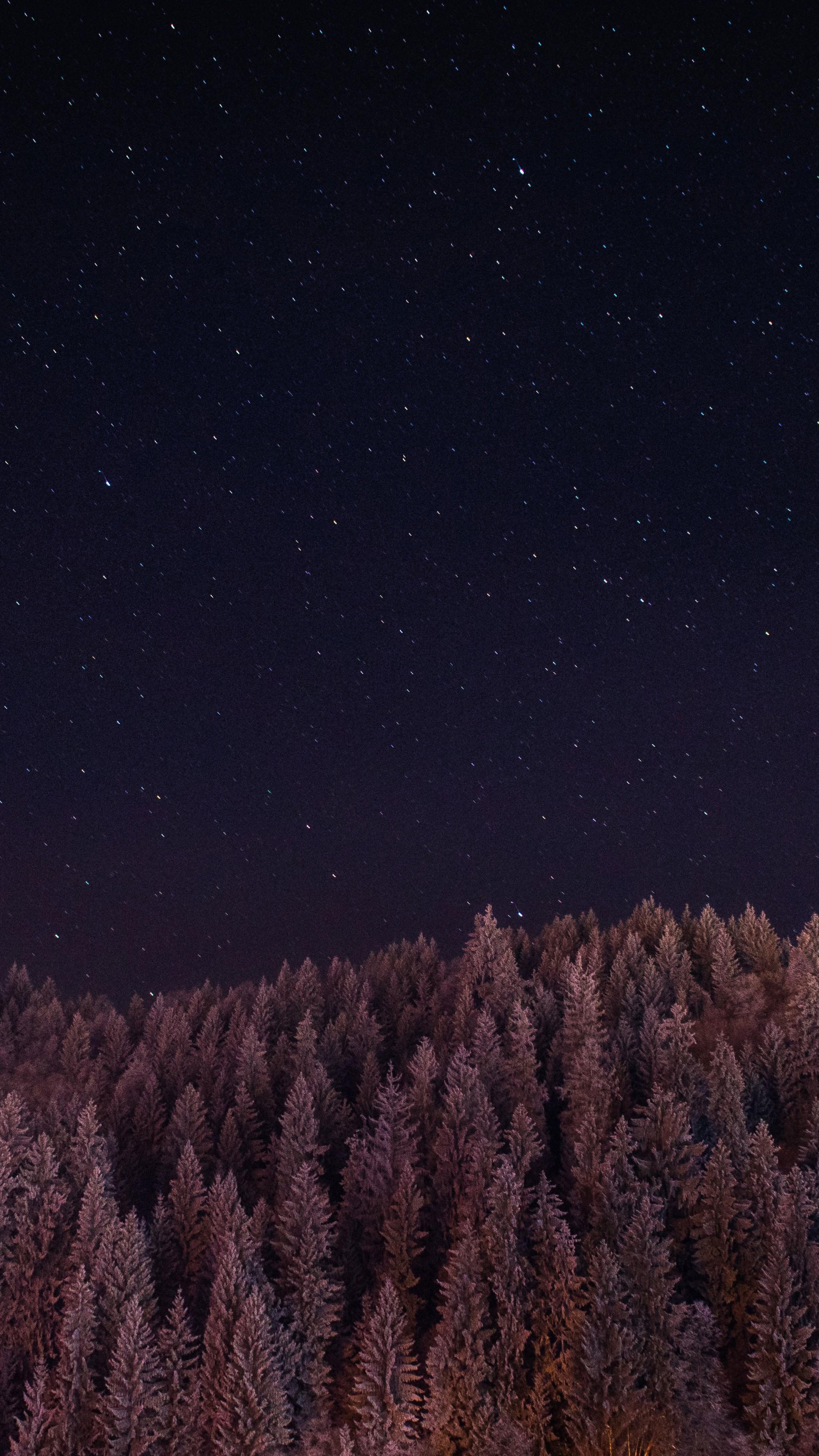 Amazing Wallpaper Night Dark - Stars-Trees-Night-Dark-Sky-Ym-Wallpaper-2160x3840  Trends.jpg