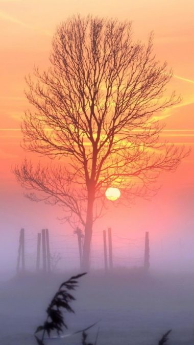 Sunset Tree Wallpaper 720x1280 380x676