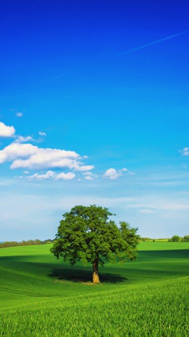 Tree Field Plain Green 380x676