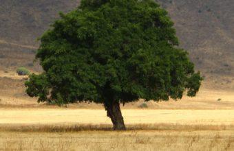 Tree Grass Field Wallpaper 720x1280 340x220