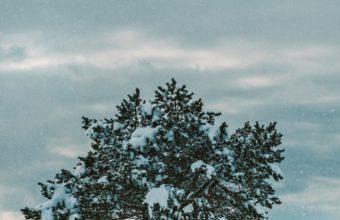 Tree Snow Winter Wallpaper 720x1280 340x220