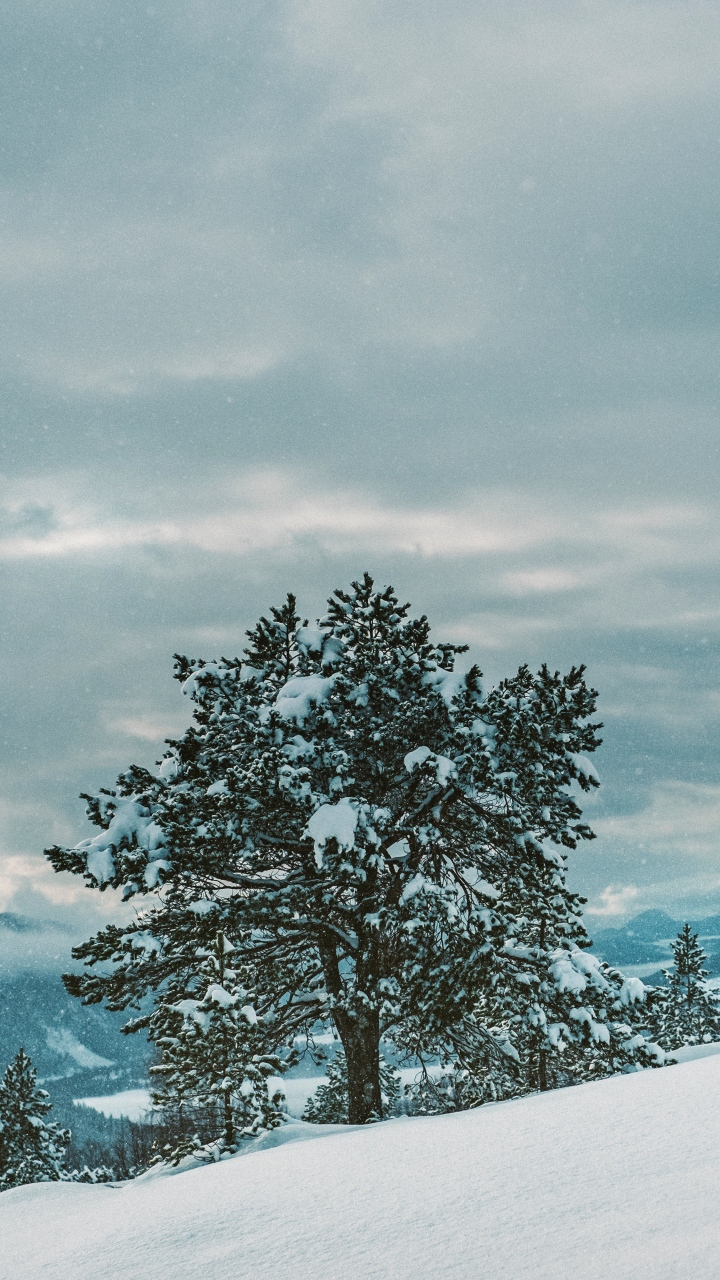 Tree Snow Winter Wallpaper 720x1280