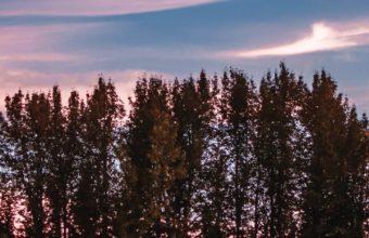 Trees Sky Sunset Grass Wallpaper 720x1280 340x220
