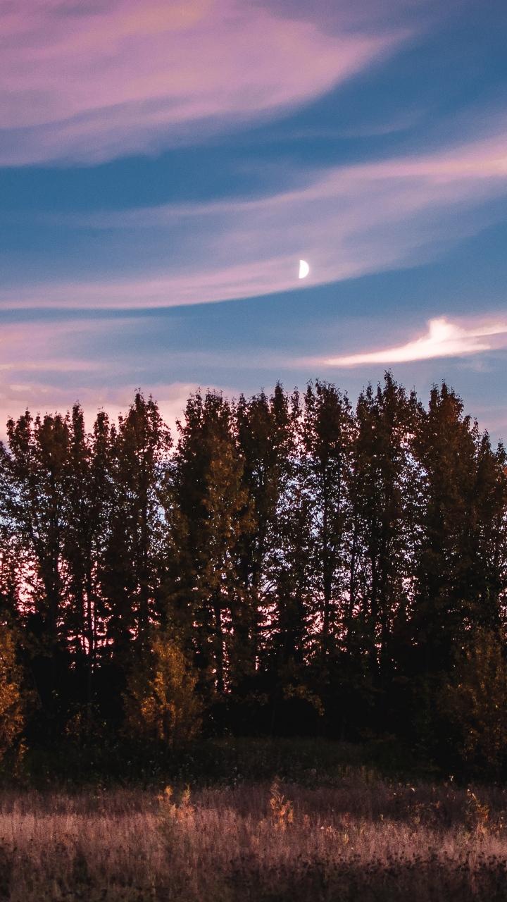 Trees Sky Sunset Grass Wallpaper 720x1280