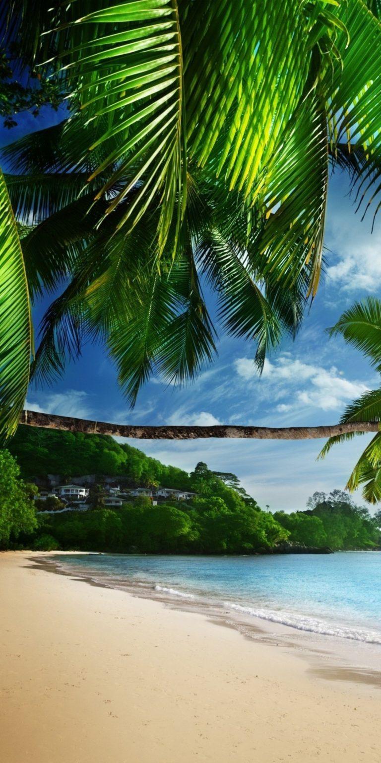 Tropical Beach Ultra HD Wallpaper 1080x2160 768x1536