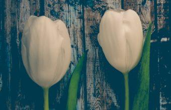 Tulips Flowers Stem Wallpaper 720x1280 340x220