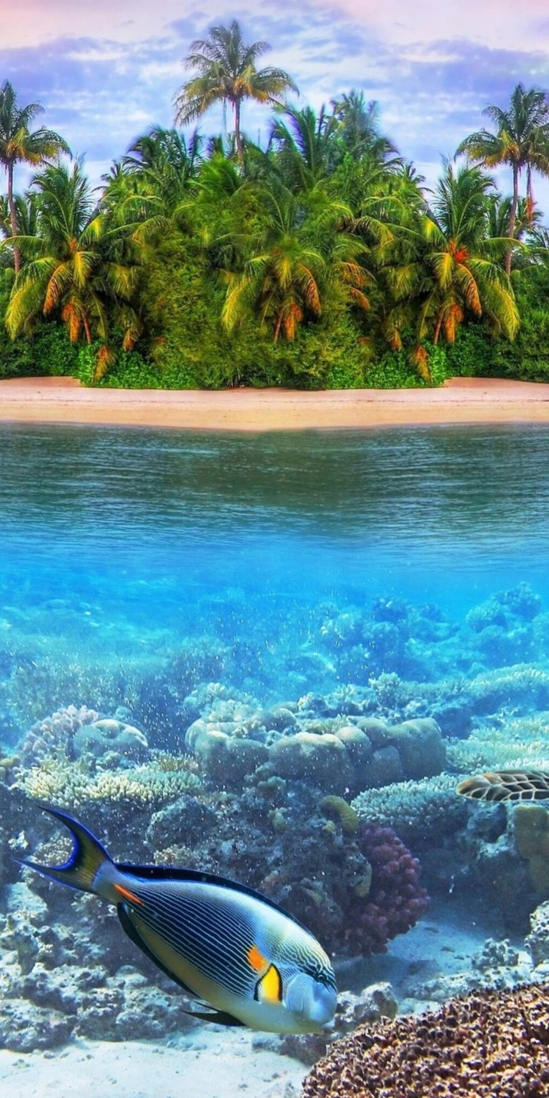 Underwater Ultra HD Wallpaper 1080x2160 768x1536